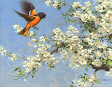 A Breath of Spring painting Northern Oriole with Apple blossoms