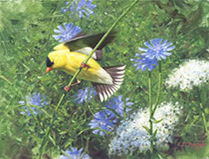 Goldfinch, Chicory, painting