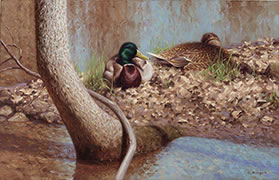 A Spot in the Sun,  painting of mallard ducks