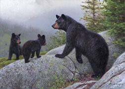Black bears, mother and cubs, summer mists in the forest, oil painting