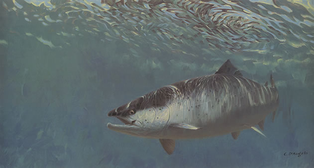 End of the Line, Painting of Salmon on fishing line underwater