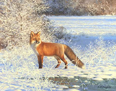Oil painting, fox in fresh snow, winter, field of snow
