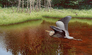 Great Blue Heron Painting, flying over woodland pond