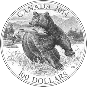 Grizzly Coin Sketch