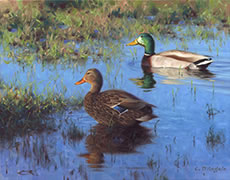 Mallards Painting of mallard ducks