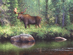 Malbaie River Moose, oil painting of a moose along the Malbaie River in summer