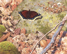 Mourning Cloak, butterfly oil painting