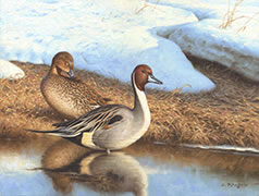 Pintail Ducks oil painting