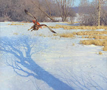 Red Tail, painting of red-tailed hawk in flight, winter
