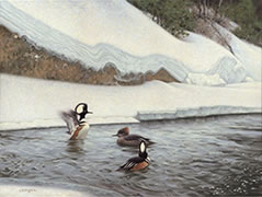 Suitors, Hooded mergansers painting