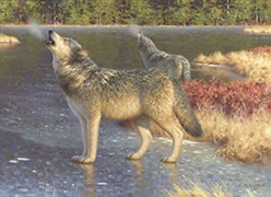The Boreal Anthem, Painting of howling wolves in the Laurentians