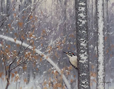 Treehugger, painting of hairy woodpecker