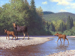 Under a Watchful Eye, moose cow with calves, northern forest, salmon river