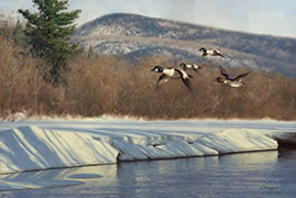 Whistlers, painting of common goldeneye ducks