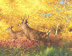 White flags oil painting,  White-tailed deer jumping ,fall forest